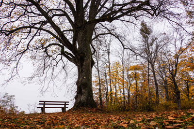 Einsame Sitzbank Herbstszenerie (Rainer Sturm_pixelio.de)